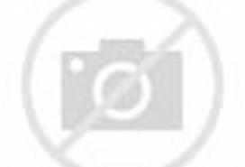 Der grösste Schmetterling der Welt