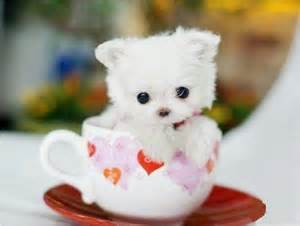 http://www.pictures88.com/cute/cutepuppywithcolourfullcup/