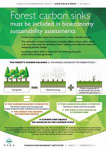 Forest Carbon Sinks Must Be Included In Bioeconomy