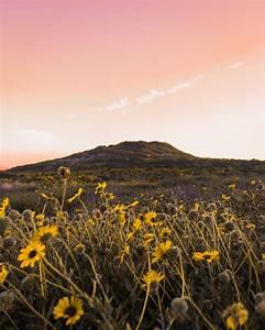 Yellow, Flower, Field, During, Daytime, Photo, U2013, Free, Nature