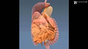 Image Internal Organs Human Body