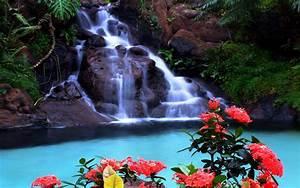Tropical Waterfall Wallpaper : Wallpapers13.com