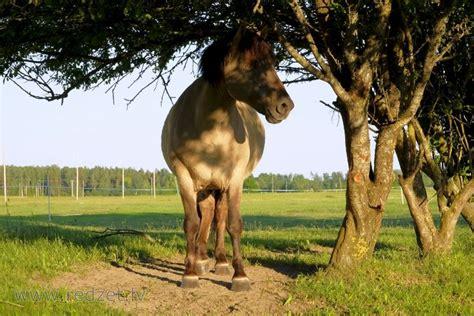 Zirgs zem koka in 2020 | Animals, Horses, Giraffe