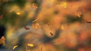 1035 Fall Trees Falling Leaves And Rainbow Storm Stock ...