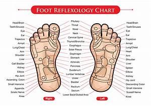 Foot Reflexology Chart Vector
