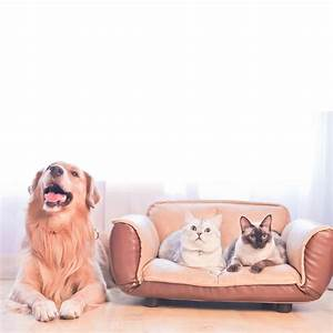 Orthopedic, Dog, Bed, Easy, Clean, Pet, Bed, With, Pu, Leather, Cover, Platform, Base, Pet, Beds, For, Medium