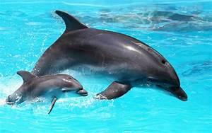 Wie Viele Arme Hat Ein Oktopus : wie viele zahne hat ein delfin das skelett der delfine i ~ A.2002-acura-tl-radio.info Haus und Dekorationen