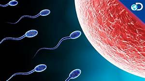 All About His Sperm
