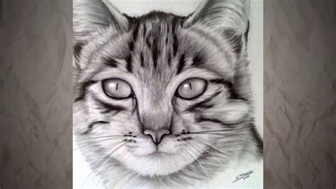 Chat with simple mobile, see advice from other customers how to live message with simple mobile if simple mobile does not offer customer support through live chat. Comment dessiner un chat - Speed drawing - Dessin réaliste   Realistic cat drawing, Cat drawing ...