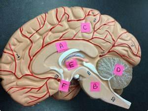 Ch12 - Nervous System