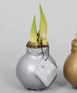Amaryllis In Wachs : amaryllis waxz gold oder silber von bakker auf blumen ~ A.2002-acura-tl-radio.info Haus und Dekorationen