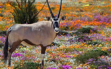 Dienvidāfrika, South Africa, wildlife, savvaļas dzīvnieki ...