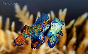 How Do Fish Mate And Reproduce Their Offspring