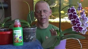 Orchideen Umtopfen Video : orchideen einpflanzen umtopfen ganz einfach youtube ~ Watch28wear.com Haus und Dekorationen