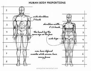 Human Body Proportions  Male And Female  By Ametystical