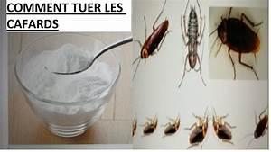 Comment Tuer Les Puces : comment tuer des punaises de lit ~ Farleysfitness.com Idées de Décoration