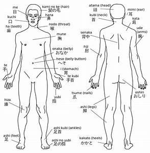 File Human Body With Japanese Labels Svg