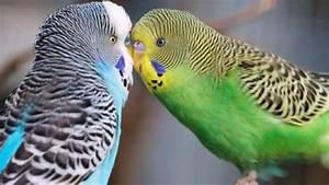 Welche Vögel Können Sprechen : warum v gel sprechen lernen k nnen tiere ~ A.2002-acura-tl-radio.info Haus und Dekorationen