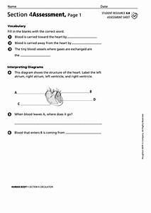 Human Body Assessment Sheet Printable Pdf Download