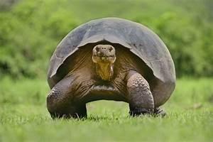 Video Porno Insolite : diego la tortue super h ros du sexe insolite ~ Medecine-chirurgie-esthetiques.com Avis de Voitures