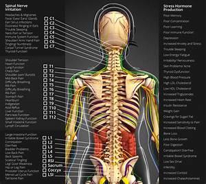 Nerve Chart