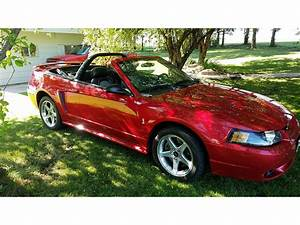 2001 Ford Mustang Cobra for Sale   ClassicCars.com   CC-879406