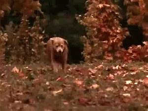Homeward Bound GIFs - Find & Share on GIPHY