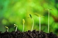 การขยายพันธุ์พืช | Other Quiz - Quizizz