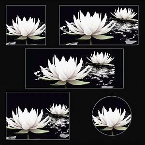 Glasbild Schwarz Weiß : artland glasbild botanik blumen seerose fotografie ~ A.2002-acura-tl-radio.info Haus und Dekorationen