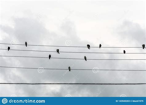 See birds on wire stock video clips. Group Of Small Birds On Electric Wires Just Like A Music Score, In Joaquina Beach, Florianopolis ...