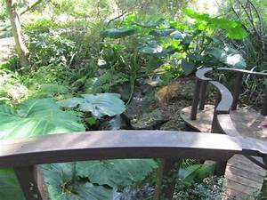 Kanapaha botanical gardens picture of kanapaha botanical for Gainesville botanical gardens