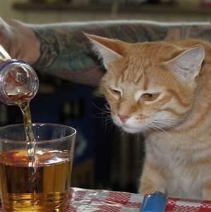 Funny Drunk Animals (27)