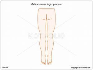 Male Abdomen Legs