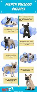 French Bulldog Growth Chart Dogs Breeds And Everything