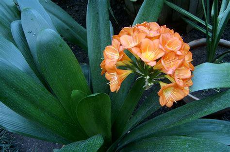 floare portocalie | lids77 | Flickr