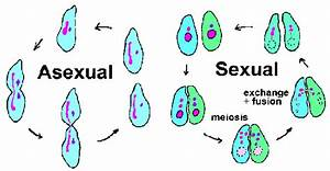 asexuell definition