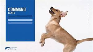 Southeastern Guide Dogs Tv Commercial   U0026 39 Anatomy Of A
