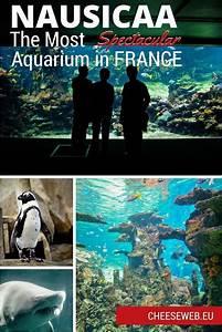 Rencontre Boulogne Sur Mer : visiting the nausicaa aquarium in boulogne sur mer france ~ Maxctalentgroup.com Avis de Voitures
