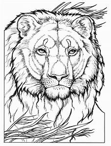 Wild Animal Coloring Books Beautiful 20 Best Images About