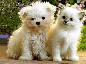 Cute&Cool Pets 4U: Cute Cats and Dogs Together Pictures