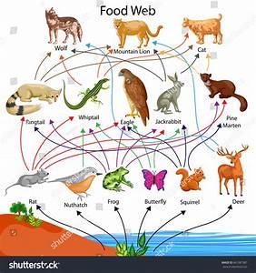 Education Chart Biology Food Web Diagram Stock Vector