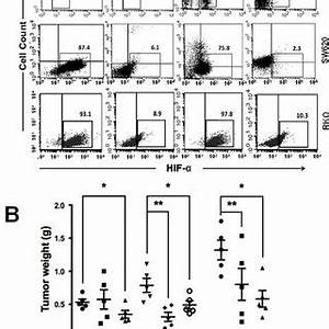 decreased in vivo tumorigenic activity of facs purified With stable 5v from old cells