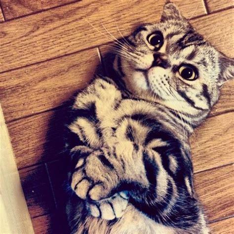 Labākais Kaķis Internetā