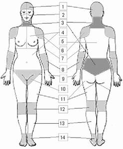 Illustration Of The 51 Regions And 14 Body Parts On The
