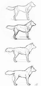 Wolf Teeth Drawing At Getdrawings