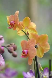 Comment Soigner Une Orchidée : comment couper une orchid e ~ Farleysfitness.com Idées de Décoration
