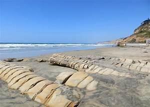 Scripps Beach La Jolla Ca California Beaches