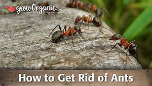 How to get rid of ants youtube for How to get rid of ants in your bathroom