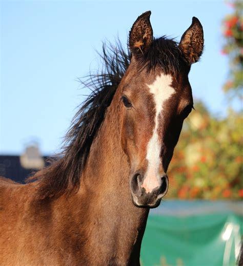 Zirgs tavai labsajūtai - Therapy Horse