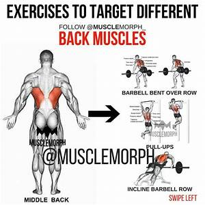 Exercise Back Musclemorph S     Musclemorphsupps Com